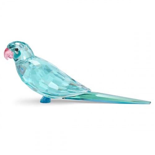 Jungle Beats Blue Parakeet Paco